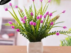 装饰室内的盆花拍摄技巧