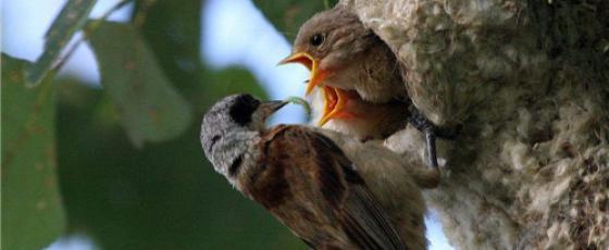 野鸟摄影的过程——接近野鸟