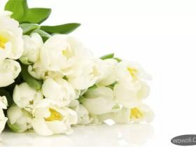 如何在外景中拍黑色或白色背景的花卉