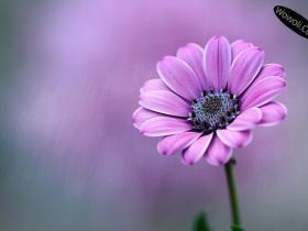 拍摄花卉摄影的技巧方法